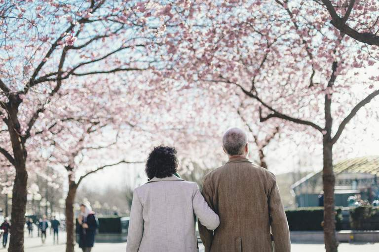 Spring in Stockholm. A middle-aged couple, backs turned against the camera, take a walk amongst the blossoming cherry trees of Kungsträdgården.