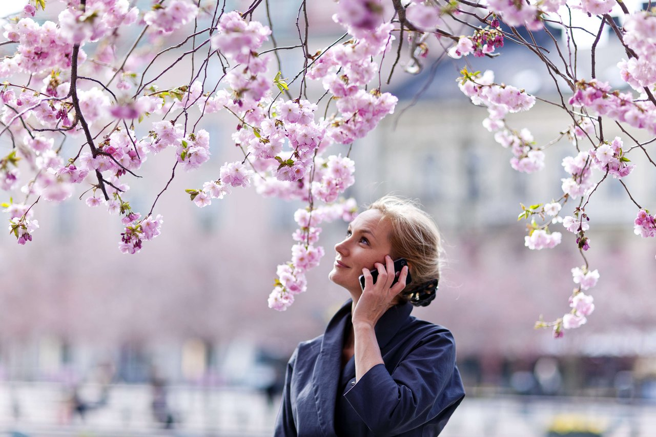 A woman talks on her mobile phone under the cherry blossoms at Kungsträdgården in Stockholm